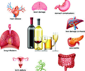 How Does Alcohol Affect the Body?
